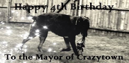 Catahoula birthday