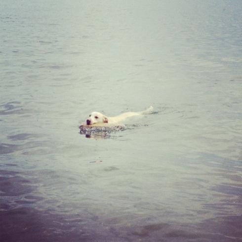 jax swims