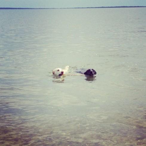 tex and jax swim