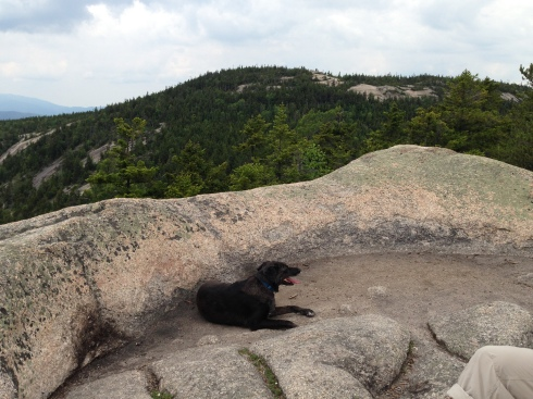 tired hiking dog