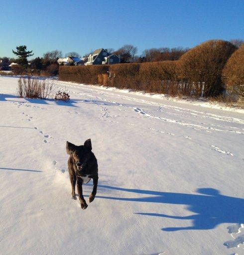 snow dog1